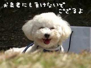 めざせ犬泉クン0316
