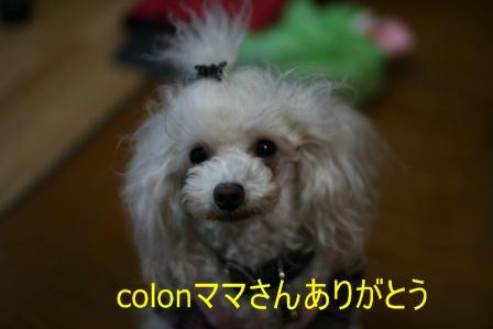 IMG_0242f.jpg