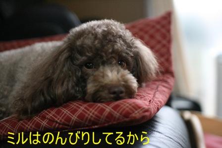 IMG_2294f.jpg