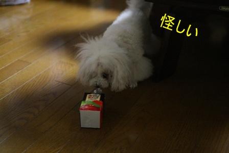 IMG_2839f.jpg