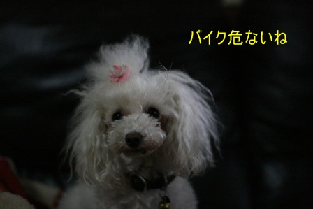 IMG_2893f.jpg