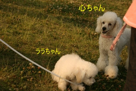 IMG_3111f.jpg