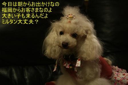 IMG_3303f.jpg