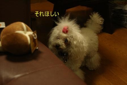IMG_3770f.jpg