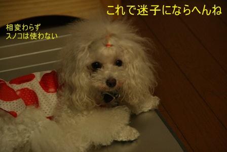 IMG_3885f.jpg