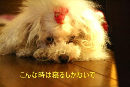 IMG_3966f.jpg