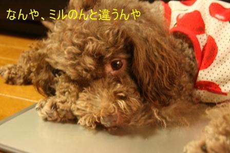 IMG_3998f.jpg