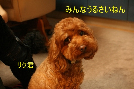 IMG_4021f.jpg