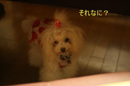 IMG_4094f.jpg