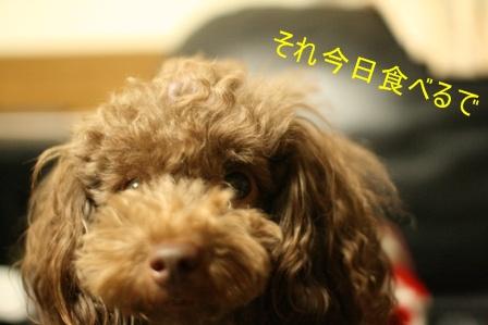 IMG_4100f.jpg