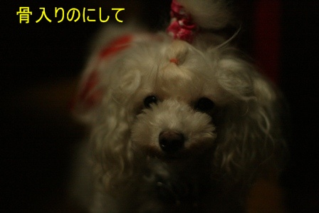 IMG_4101f.jpg