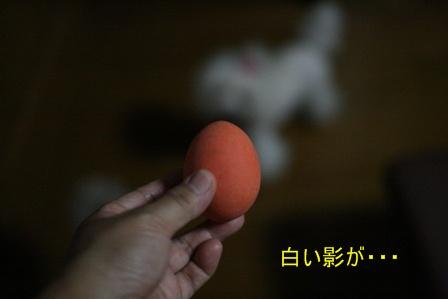 IMG_4205f.jpg