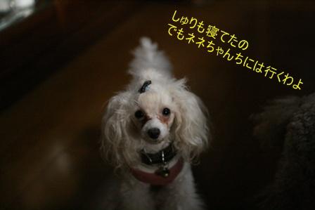 IMG_9223b.jpg