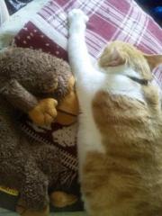 おさるの抱き枕?2
