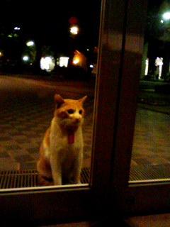 夜ドア前の小次郎