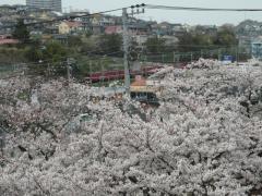 090405_KQ-Nishishiba.jpg