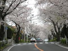 090405_Nishishiba.jpg