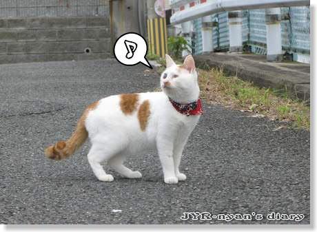 daichi1110107
