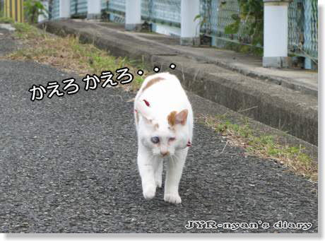 daichi1110109