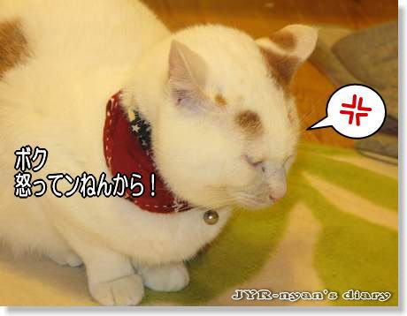 daichi111031
