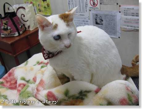 daichi120311_3