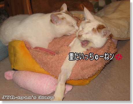 ichidai120304_9