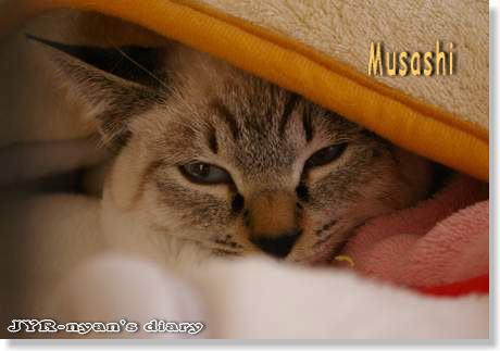 musashi1111092