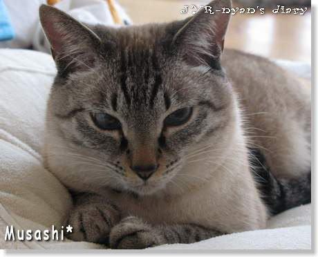 musashi120319