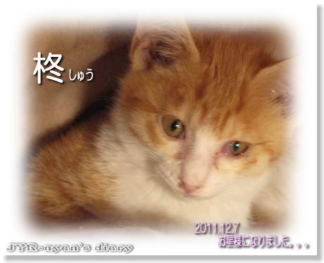niwachibi111207_7