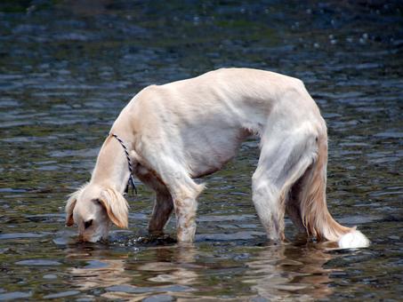 川で水分補給中