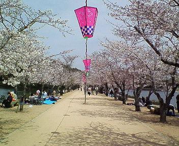 桜ですってよ、奥さん