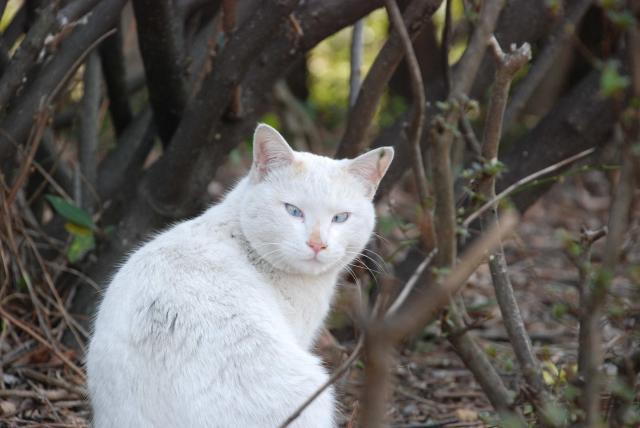 葛西臨海公園の猫