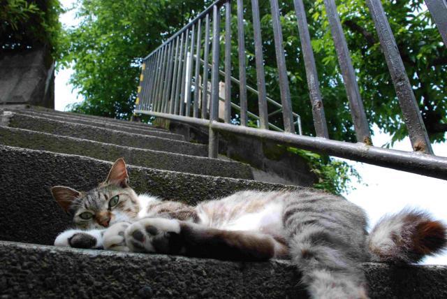 川崎市麻生区の猫