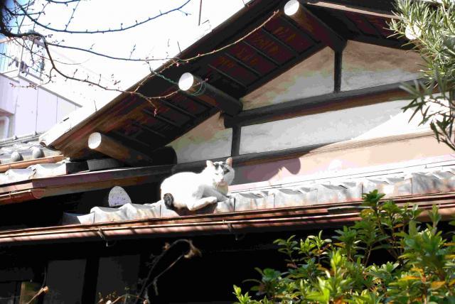 都立家政駅の猫