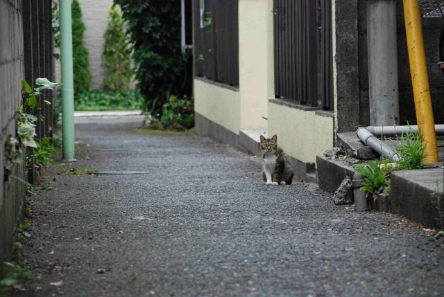 阿佐ヶ谷の猫