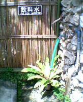 PIC_0136.jpg