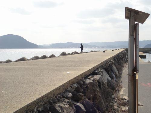 相賀漁港エギンガー