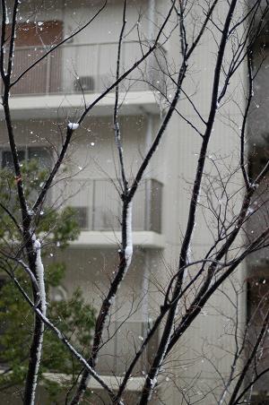 雪です。。。