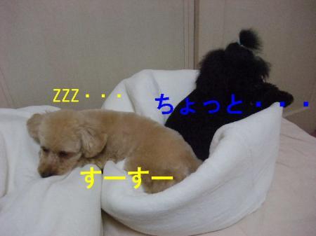 DSCF34461.jpg