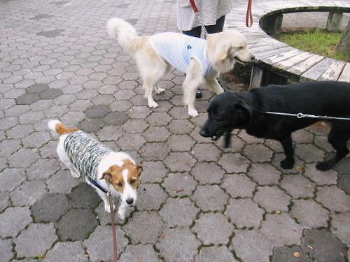 2011長岡公園671