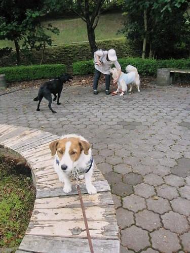 2011長岡公園674