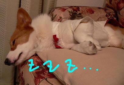 テレビ見ながら寝てる