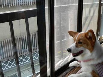 窓の外チェック