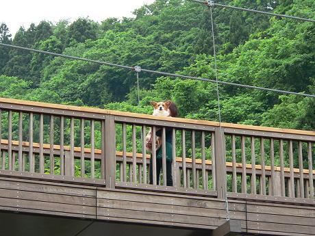 吊橋(1)