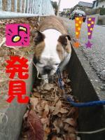 30日 お散歩 (1)