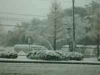 03日 雪 (3)
