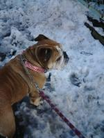 04日 雪散歩