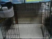 31日 3犬 (6)