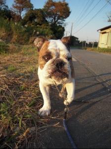 23日 お散歩