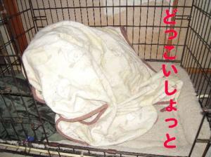 16日 おねむウメ (2)